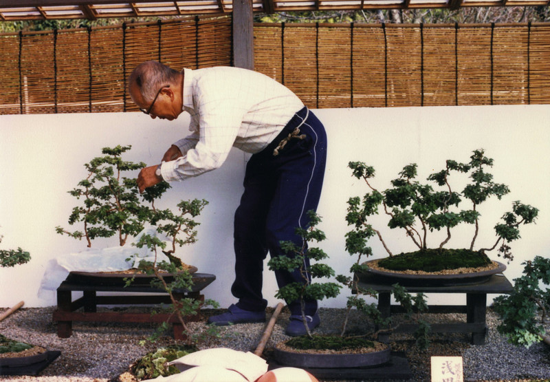 The first time I visited Himeji Castle, there was a bonsai show out front. I found it really interesting...all the more so when I learned these are chrysanthemums! And some of the plants there had been handed down from people's grandfathers. Wow.