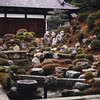 One of the gardens at Tofuku-ji.