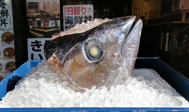 Tsukiji fish head