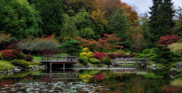 22 Oct 2010: Fall colors in the Japanese Garden at the Arboretum.  More at   http://dougw.smugmug.com/Other/Japanese-Garden-at-the/11654894_5GVuf