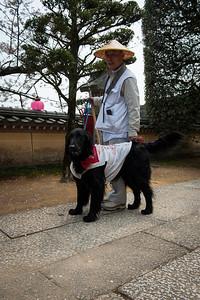 Le chien effectue aussi le pèlerinage des 88 temples de Shikoku.