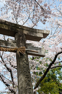 Temple de la glycine, Fujiidera (n°11 du pèlerinage des 88 temples de Shikoku), île de Shikoku, Japon, avril 2014.