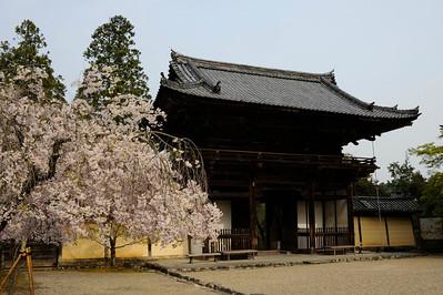 Temple Jinjo-ji, à l'ouest de Kyoto, près du Mont Agato, Japon, avril 2014