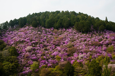 A l'ouest de Kyoto, près du Mont Agato, Japon, avril 2014.