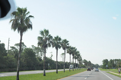 Palm Trees on Ponte Vedra
