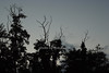 atmosphere<br /> photo by Rob Rich © 2008 robwayne1@aol.com 516-676-3939