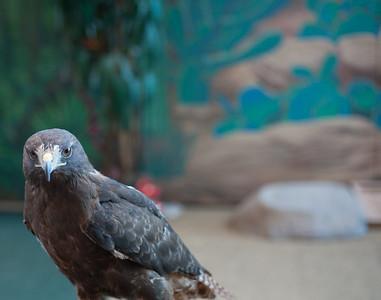 Jeppesen Denver Zoo
