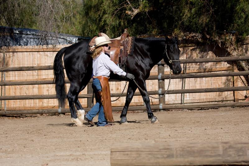 gorgeous mare..prettier even, in person.