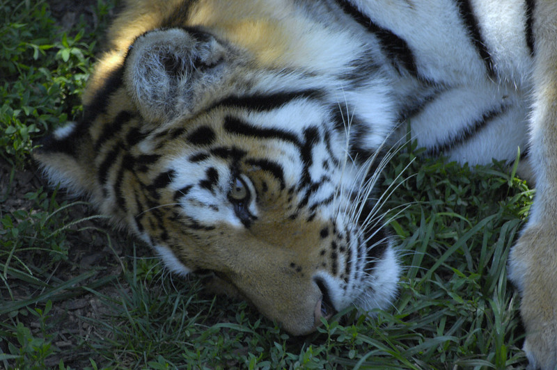 Stl Zoo 09057