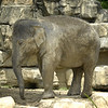 Stl Zoo09 024