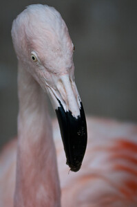 Flamingo topside