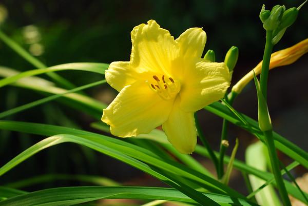 Johnson Flowers