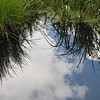 Wetlands at Sagehen Creek