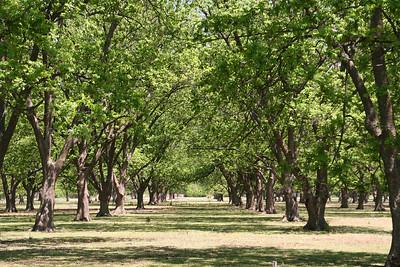 Pecan grove north of Main on 4th Street