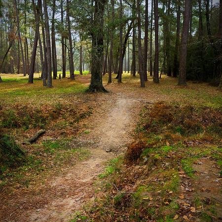 Cochran's Crossing Bayou Trail - Feb 2011