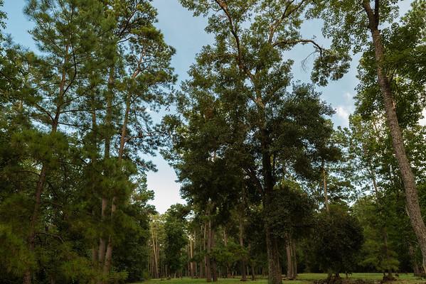 Cochrans Crossing Bayou, The Woodlands Texas, July 2012
