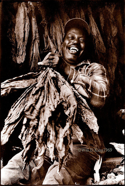 """Mr. Brown"", photographed stripping tobacco in a tobacco barn in Lower Marlboro, Maryland"