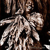 """""""Mr. Brown"""", photographed stripping tobacco in a tobacco barn in Lower Marlboro, Maryland"""