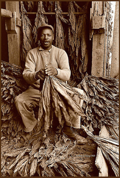 """Leroy"", photographed stripping tobacco in Lower Marlboro, Maryland."