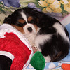 Daisy The Diva BMX Team Mascot Taking a Nap after a Day at The Races.<br /> <br /> Photographer's Name: Steve Wallace<br /> Photographer's City and State: Anderson, IN