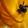 Buzz Buzz<br /> <br /> Photographer's Name: Brian Fox<br /> Photographer's City and State: Anderson, IN