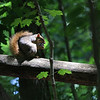 On this beautiful Wednesday a squirrel was having lunch on a log.<br /> <br /> Photographer's Name: Jerry Byard<br /> Photographer's City and State: Anderson, Ind.
