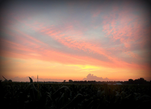 The beautiful 7-3-13 sunset as seen from 650W. The corn is just about to get in the way.<br /> <br /> Photographer's Name: Harry Kirchenbauer<br /> Photographer's City and State: Anderson, Ind.