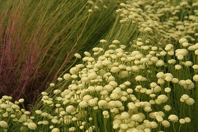 Bodega Bay flowers