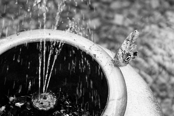 A butterfly perched on the edge of a fountain at the Indianapolis zoo<br /> <br /> Photographer's Name: Morgan Elbert<br /> Photographer's City and State: Alexandria, IN