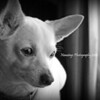 My dog Lucy.<br /> <br /> Photographer's Name: Angie Tays<br /> Photographer's City and State: Frankton, Ind.