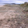 Pumice stones show where storm surge reached base of main dune