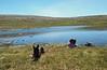 No peace on the Macdui plateau