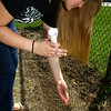 5-8-13<br /> Kokomo Area Career Center culinary arts students planting an herb and vegetable garden at KHS.<br /> Cailee Wilson dropping seeds into rows.<br /> KT photo   Tim Bath