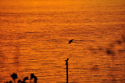 Sunset #5             6-05-2010