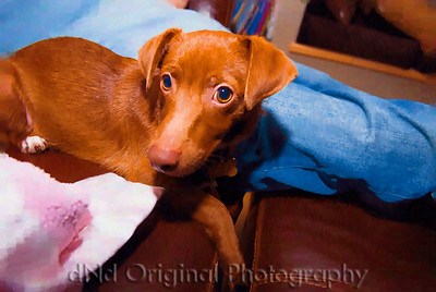 Mike & Nancy's (Nanner Banner) Dog