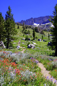 On the trail, hike to lake winnemucca out of Woods lake. beautiful flowers and late snow.