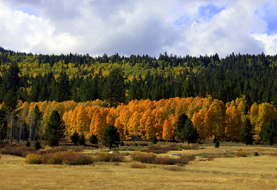 layers. beautiful trees and clouds off Hwy 88.