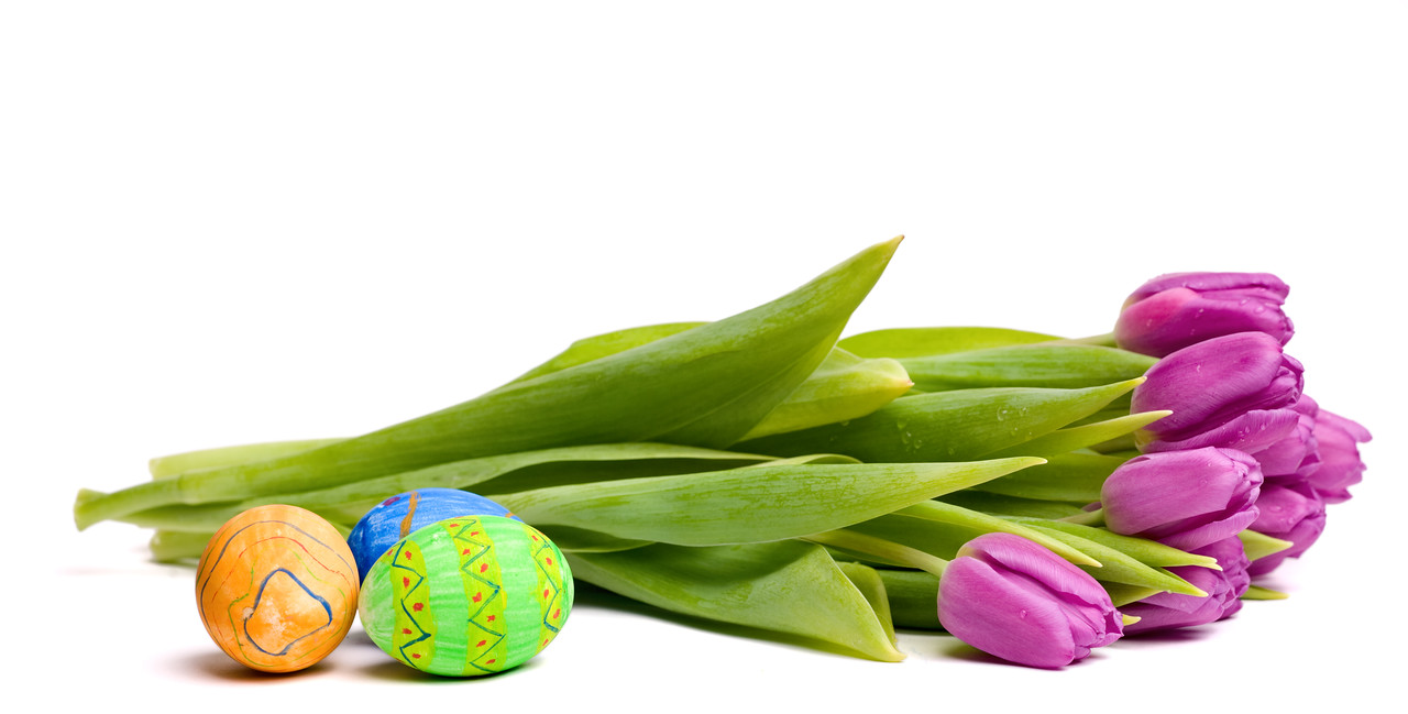 Spring symbols: tulips and Easter eggs isolated on white background