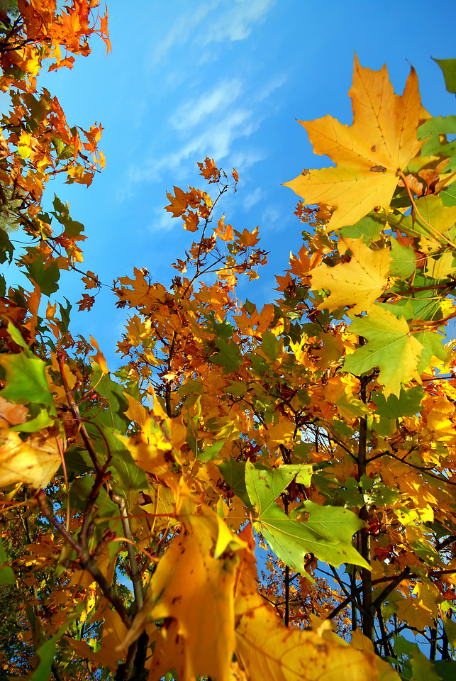 Colorful autumn leaves against a blue sky with clouds