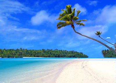 Palm Tree on One Foot Island