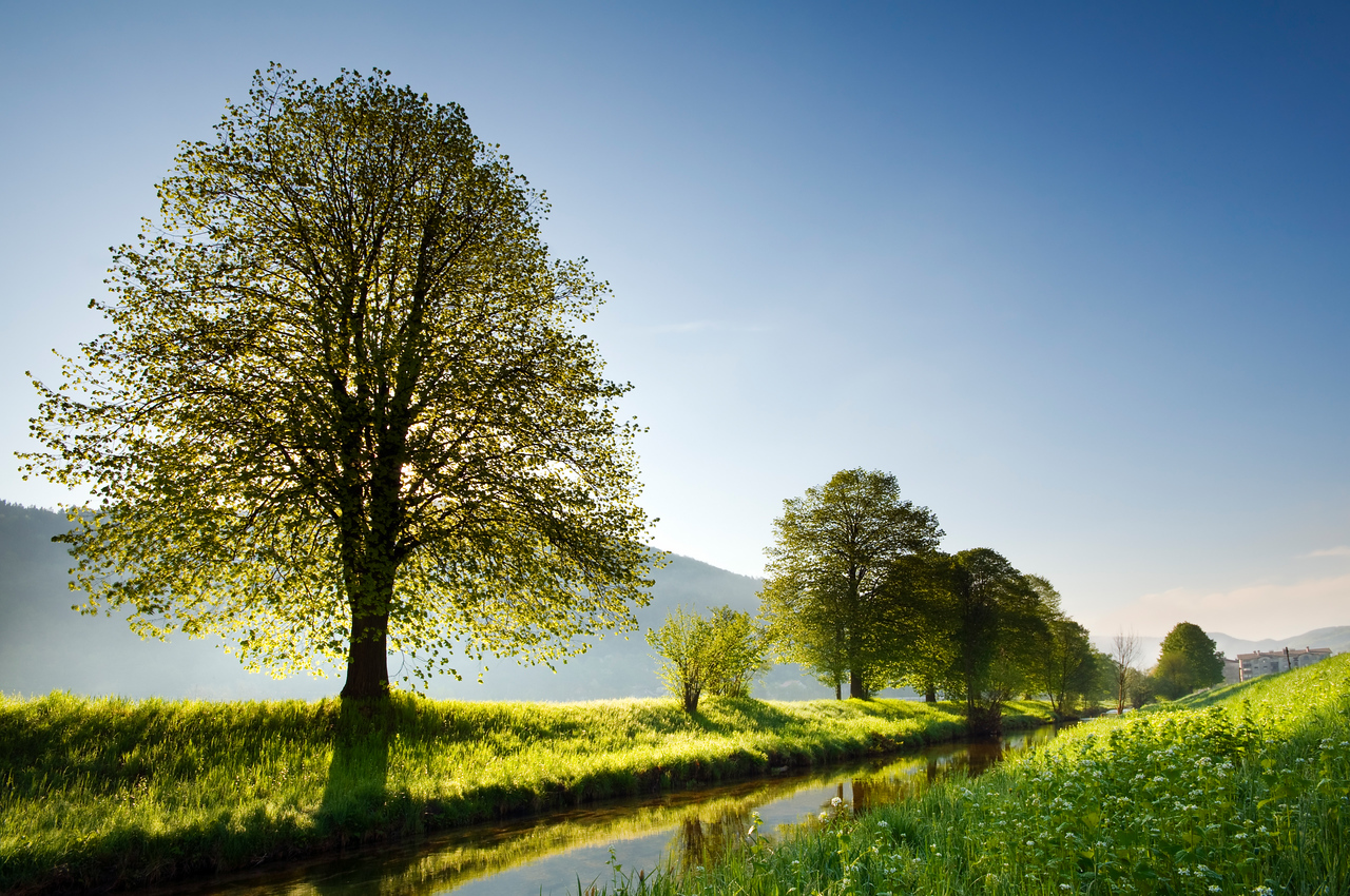 Beautiful backlight spring nature scene on clear day