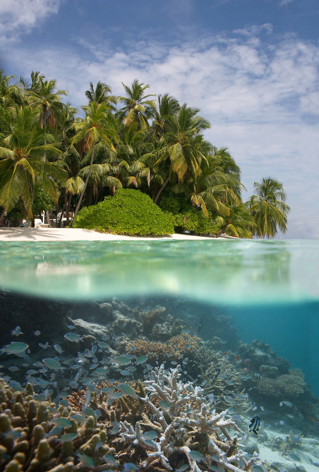 tropical island over and under water