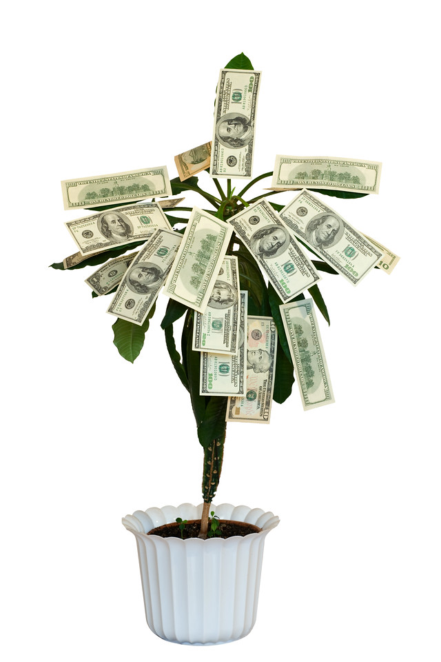 Money tree. Isolated on white.