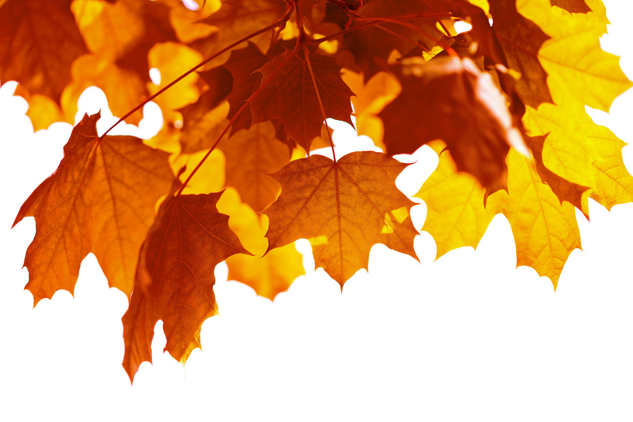 beautiful autumn leaves isolated