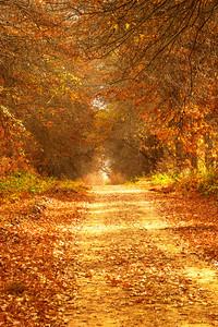 Autumn trees and leaves from Jonkershoek