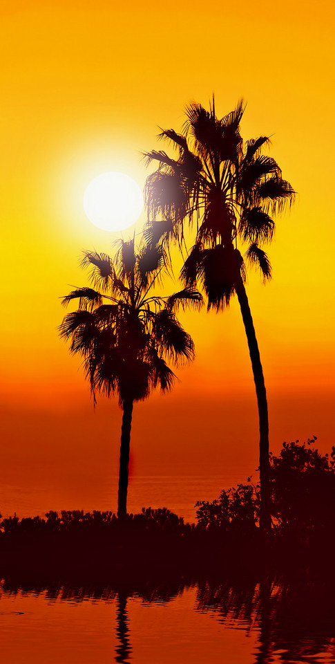 Tropical sunset with palmtrees