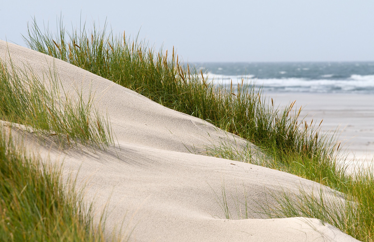 Grass in sand dunes in front of the beach and sea