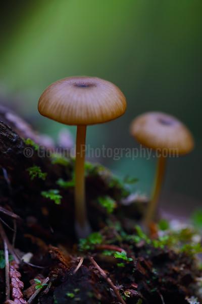 Mushrooms on Forest Floor