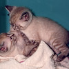 Kafka and Saki (on top) tiny kittens in 2000