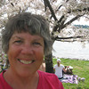 2010 April Solo trip to Washington DC to see the Cherry Blossoms